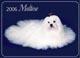 Мальтезе - это маленькая собачка.  Породу считает древней, считается...